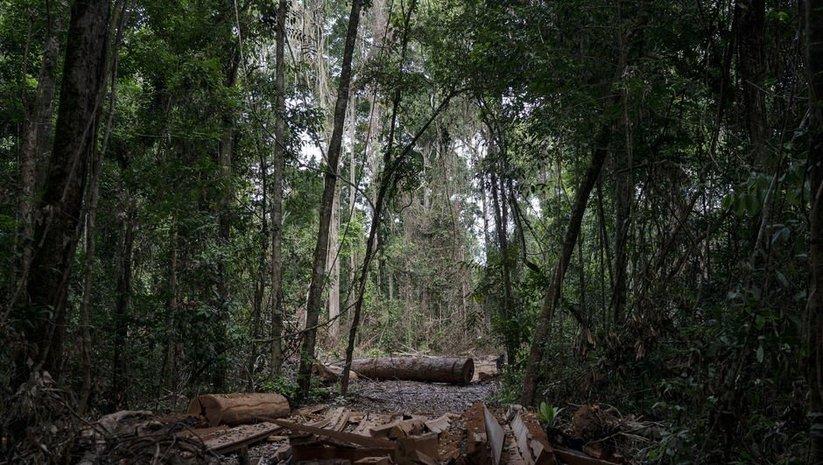 Yanomami Kabilesi